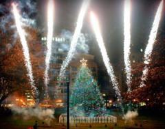 Boston Common Tree
